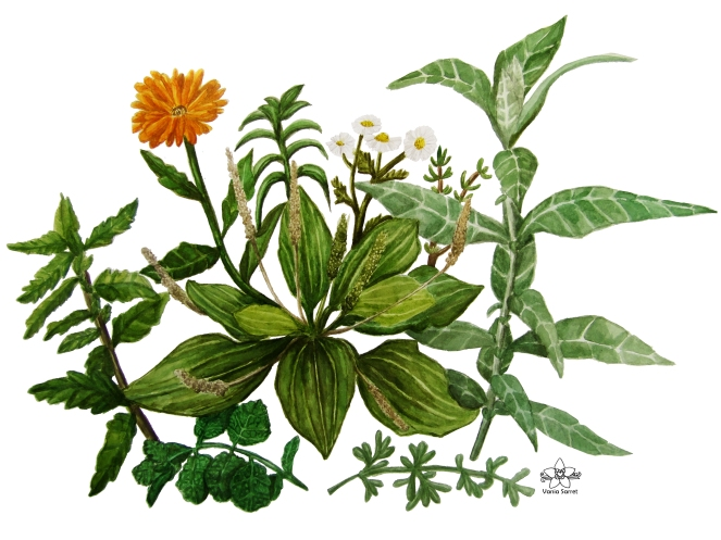 Jardin de medicinales 1