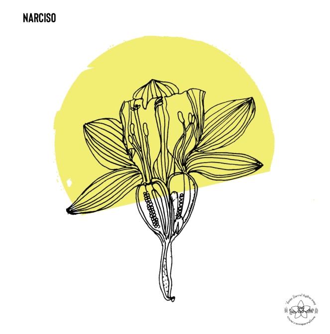 narciso2