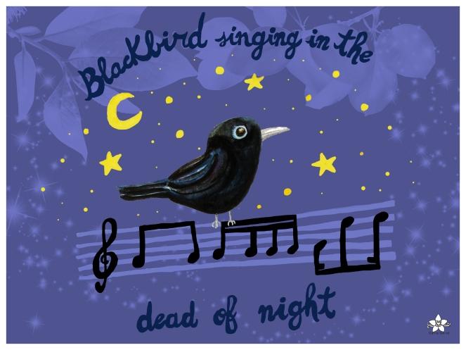nuevo blackbird mirlo listo