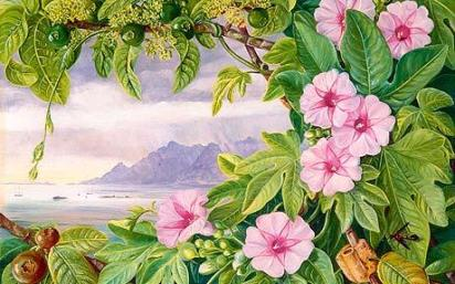 Marianne north 2