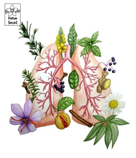 Plantas y pulmón1